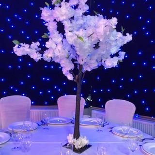 White%20Blossom%20Trees%20120cm%20FOR%20