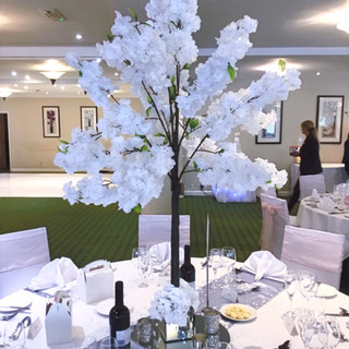 White%20Blossom%20Trees%20for%20Hire%205