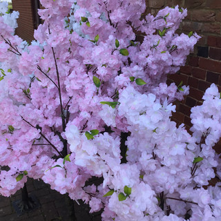 Pink Blossom trees for hire