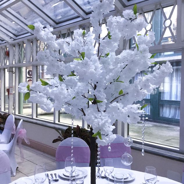 White Blossom Trees for hire 150cm