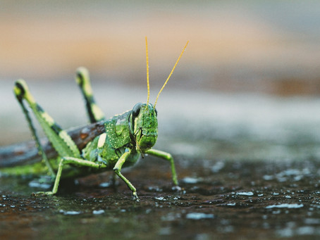 The Grasshopper, Timely Transformation