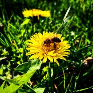 Seasonal Allergies Impacting You?