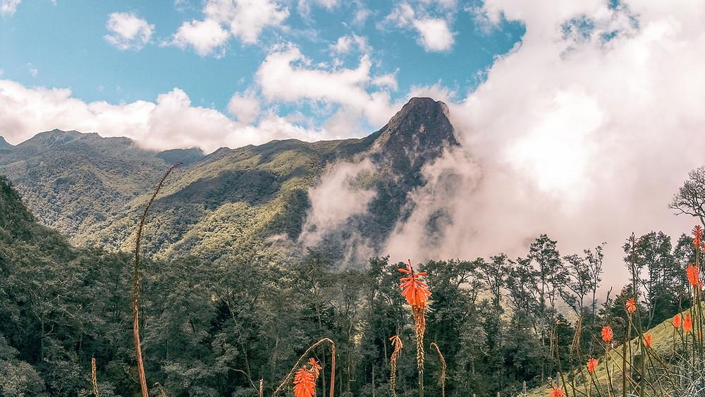 valledecocoracolombia