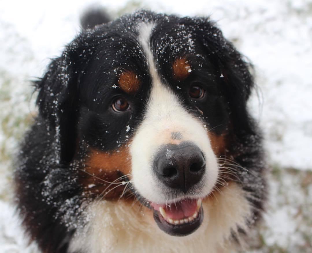 berner snow1.jpg