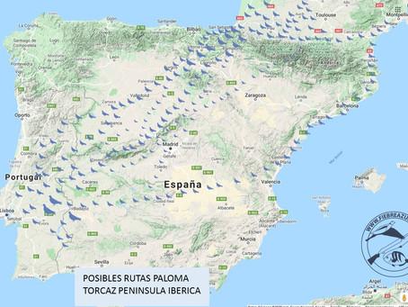 POSIBLES RUTAS DE LA PALOMA TORCAZ EN LA PENINSULAR IBÉRICA