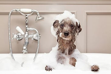 how-to-bathe-dog-1587137329.jpg