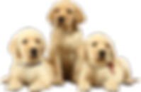 Puppies-Free-PNG-Image.png
