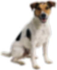 happy-dog-png-7_edited.png