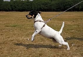ddd-dog-pull-leash-1.jpg.webp
