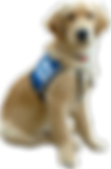 service-dog-png-15-clip-arts-and-logos-f