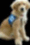 service-dog-png-15-clip-arts-and-logos-f