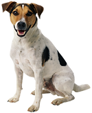 happy-dog-png-7.png