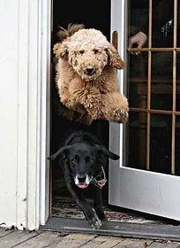 dogs-out-the-door.jpg