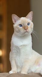 cat cat.jpeg