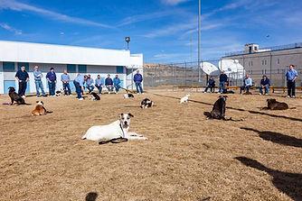Nevada-Humane-Society-Carson-City-Pups-o