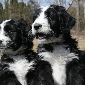 Ori & Bella