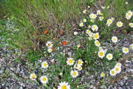 dixiesflowers