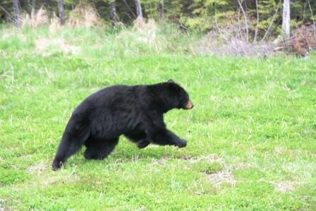 Running bearcomp