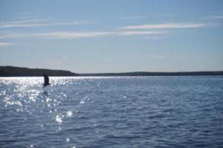 eaglefishing