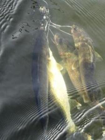 underwaterwalleye