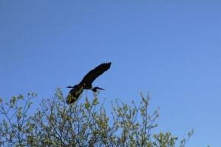 heron flight3