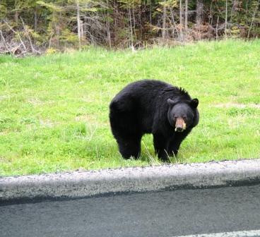 This bear was hanging out along the road on their way up.