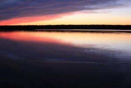 sunset2critter