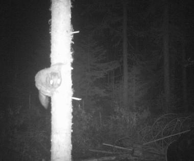 bearsquirrel
