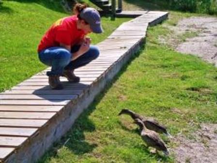 Chads Katrina feeding ducks