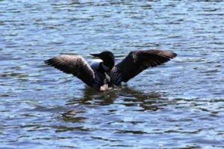 loon over there lookatm34