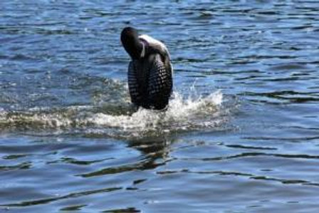 loon over there lookatme3