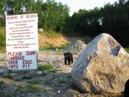 Ironic bear