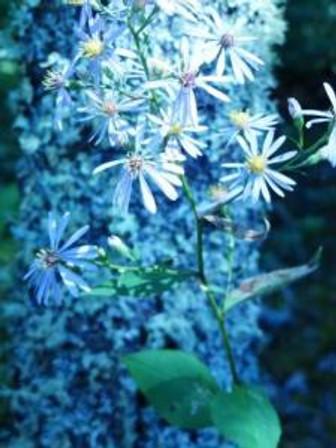 flower4sometypeofaster