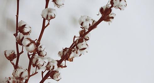 cotton-922881_1920_edited_edited.jpg