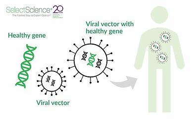 Schematic_SS_Viral-vector2.webp