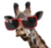 Funny vogue fashion portrait of a giraff