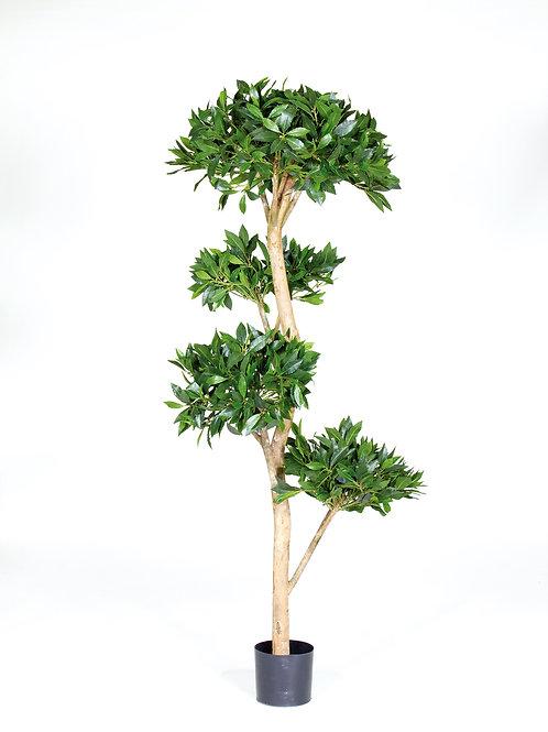 Laurel Tree Deluxe