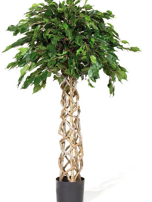 Braided Ficus Exotica Ball