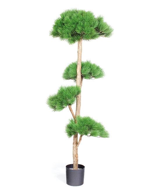 Pinus Deluxe