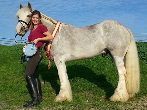 Gypsy Cob All Breeds Champion