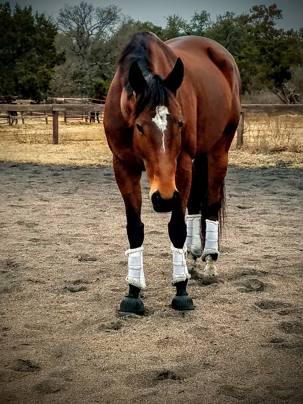Relaxed and engaged horse