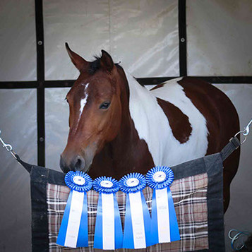 Crisma shows off her blue ribbons!