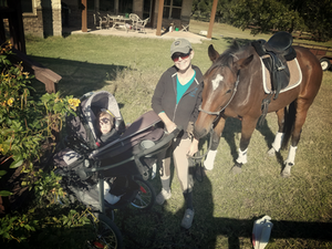 Crystal, baby and OTTB