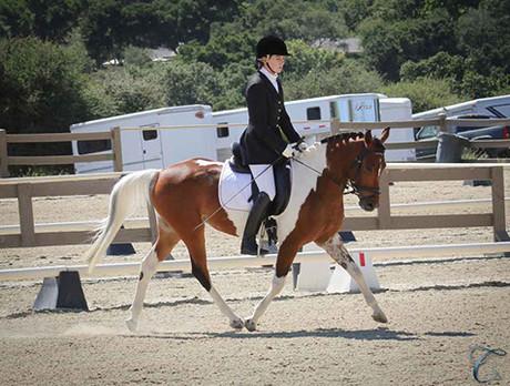 Sport Pony