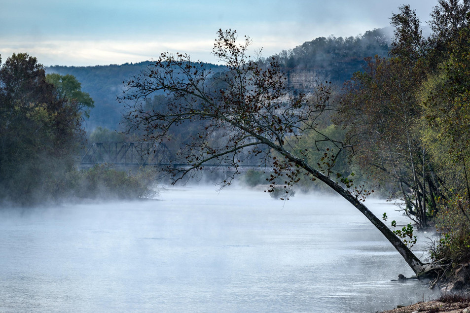 Tree over Gasconade River
