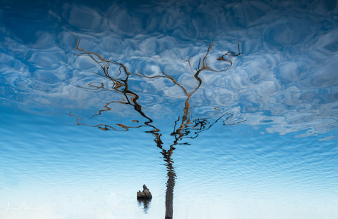Tree in Reflection