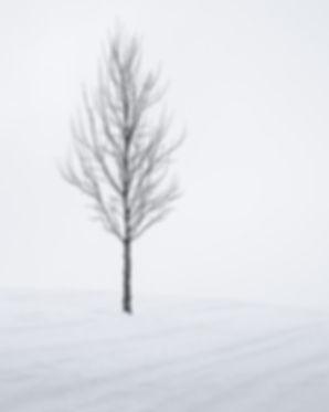 Simply Snowy Tree 6 Web.jpg