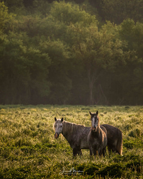 Two in a Field