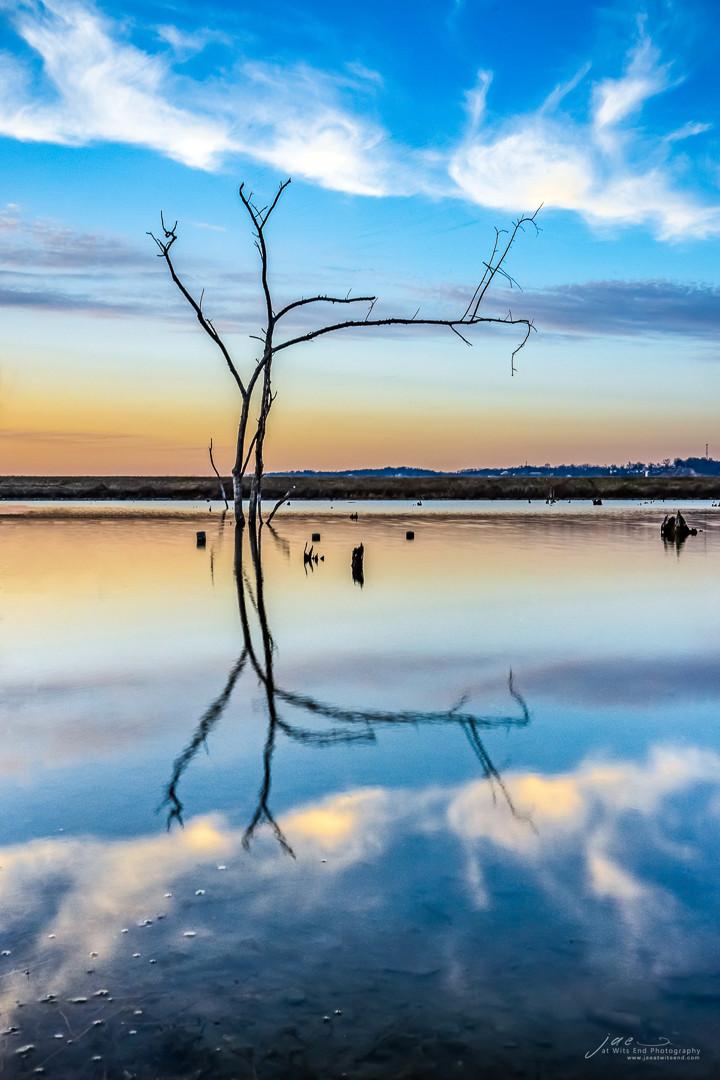 Photo Tree reflection