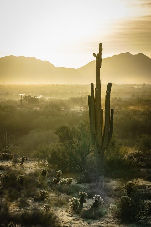 Sun across the Desert